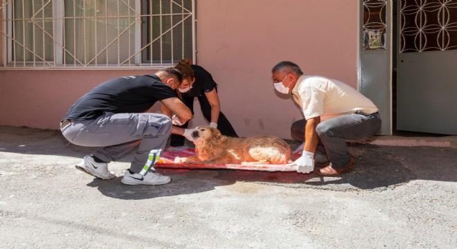 Bir yılda 11 bin 500 sokak hayvanı tedavi edildi