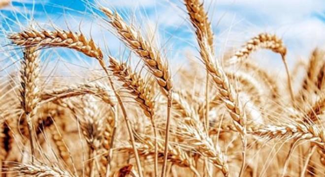 Tarımsal destek programı açıklandı. Listede Çeşme'de var.